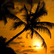 Stock Photo: Silhouette Palm Tree with Sunset.