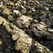 A farmer's plowed field - Stock Photo