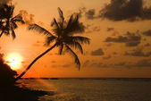 Silhouette Palm Tree with Sunset. — Stok fotoğraf