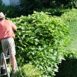 Man cut the hedges — Stock Photo #8626711
