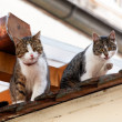 Two cats on a house roof — Foto Stock