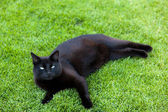 Black cat is located in a meadow — Stock Photo