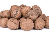 Walnut on a white background — Stock Photo
