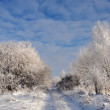 Beautiful winter landscape. — Stock Photo
