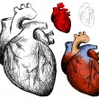 Realistic heart — Stockvectorbeeld