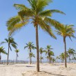 Beautiful palm tree over white sand beach. — Stock Photo
