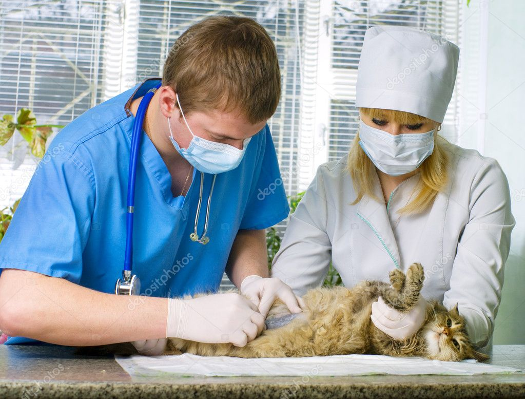 Wounded cat treated by veterinarians — Stock Photo #10320082