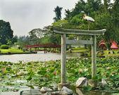 Japanese garden landscape — Stock Photo