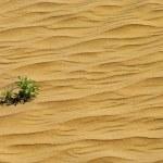 Green plant grow through sand — Stock Photo