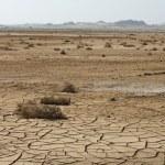 Dry cracked soil and plant in desert — Stock Photo