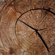 Tree trunk cut — Stock Photo #10411047