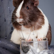 Guinea pigs and gift and heart — Stock Photo #8936836