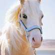 Portrait of a pony against the sky — Stock Photo