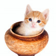 Red kitten in a clay pot — Stock Photo