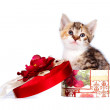 Multi-colored kitten in gift box — Stock Photo #9230639