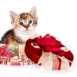 Multi-colored kitten in gift box — Stock Photo #9248632