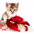 Multi-colored kitten in a gift box - Stock Photo