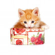 Red kitten in gift box — Stock Photo #9284393