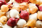 Close Up Of Colorful Pearl Onions — Stock Photo