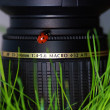 Ladybird on lens — Stock Photo