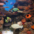 Stock Photo: Acuario
