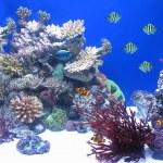Variedad de peces bajo el agua — Stock Photo #8209009