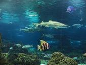 Tiburón y peces en el fondo del mar — Stock Photo
