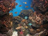 Peces en el mar — Stock Photo