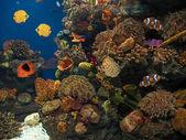 Peces exóticos en el fondo del mar — Stock Photo