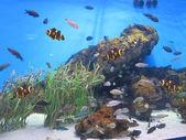 Bonitos peces en el fondo del agua — Stock Photo