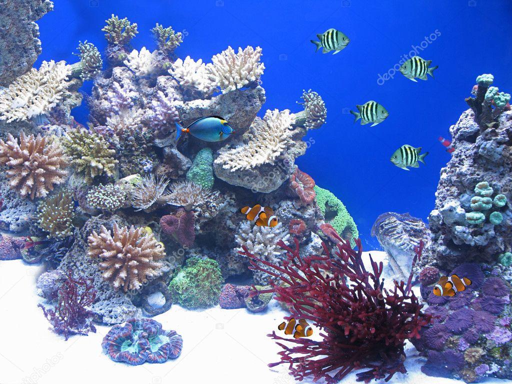 Variedad de peces bajo el agua foto stock cristi 8209009 for Variedad de peces