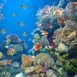 Acuario — Stock Photo
