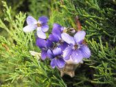 花と植物 — ストック写真
