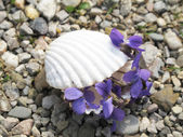 Lilas en una concha — Foto de Stock