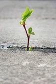 Boom groeien door barst in bestrating — Stok fotoğraf