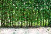 Tree wall — Stockfoto