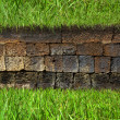 Stock Photo: Green grass on wall