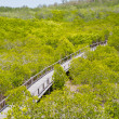Stock Photo: Path to mangrove