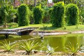 Hermoso jardín — Foto de Stock