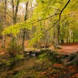 Small river in the portuguese national park of Geres in beautifu - Stock Photo