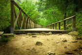 Wood bridge in the forest — Foto Stock