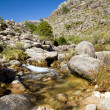 Small river at the mountain in the portuguese national park of G — Stock Photo
