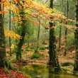 Small autumn river at Geres National Park, north of Portugal — Stock Photo