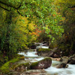 Autumn river — Stock Photo #9361106