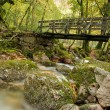 Autumn forest with wood bridge — Stock Photo
