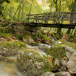 Autumn forest with wood bridge - Stock Photo