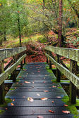 Wood bridge at the forest — Stock Photo