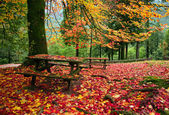 Fall leaves trees — Foto Stock