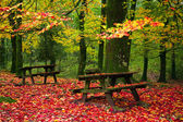 Fall leaves trees at Geres national park — Stockfoto