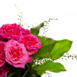 Decoration for greeting card from the pink roses — Stock Photo #8706552
